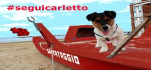 Promozione-box-cani-carletto