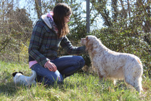 cinofilia-blog-box-cani-metalmax