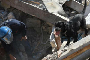 terremoto-metalmax-box-cani-001