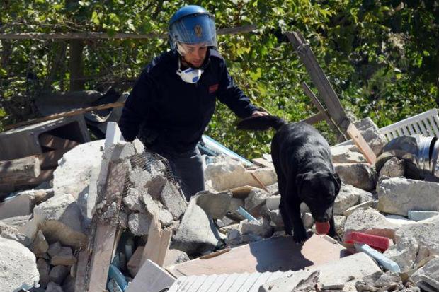 terremoto-metalmax-box-cani-002